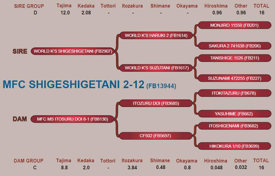 shigeshigetani-2-12